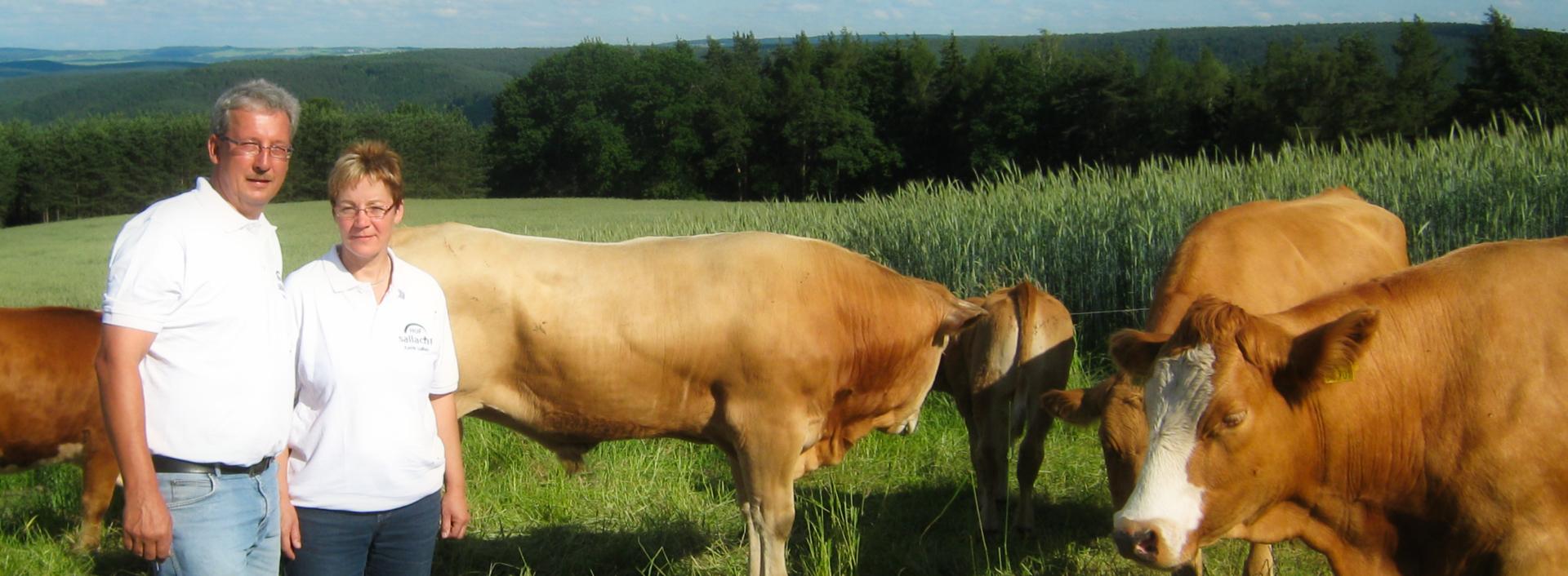 Sallachs und die Rinder